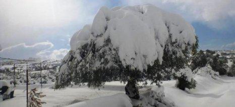 Έως 6 Δεκεμβρίου αιτήσεις ενίσχυσης ελαιοπαραγωγών των Τρικάλων λόγω παγετού