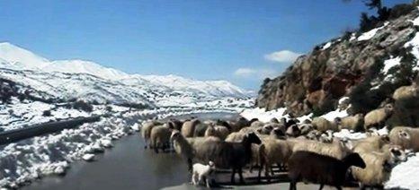 Συστάσεις προς αγρότες-κτηνοτρόφους του Ηρακλείου για τη χειμερινή περίοδο