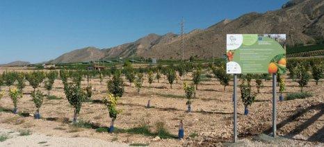 ClimaTree για τον υπολογισμό του διοξειδίου του άνθρακα από τις δενδρώδεις καλλιέργειες