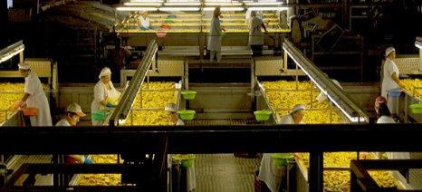 Συστάσεις των κονσερβοποιών για να σωθεί η φετινή παραγωγή συμπύρηνου ροδάκινου
