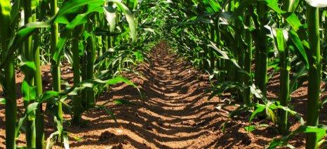 Από τον Απρίλιο θα μπορεί το κάθε κράτος-μέλος να απαγορεύει καλλιέργειες ΓΤΟ
