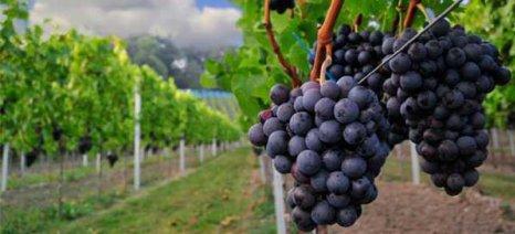 Σημαντικές αλλαγές στον τομέα του οίνου φέρνει η ΚΑΠ μετά το 2020