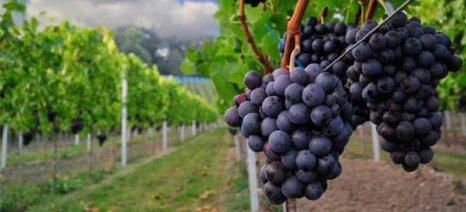 Οδηγίες για το πρόγραμμα αναδιάρθρωσης και τις Δηλώσεις Παραγωγής Οίνου
