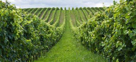 Παραμένει κορυφαία παγκοσμίως παραγωγός οίνων η Ιταλία