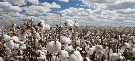 Κλιμακώνονται οι αντιδράσεις των βαμβακοπαραγωγών στις συμβάσεις των εκκοκκιστών