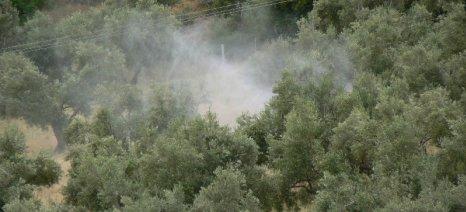 Δολωματικοί ψεκασμοί κατά του δάκου σε δύο περιοχές της Π.Ε. Χανίων θα γίνουν στις 25 Ιουλίου