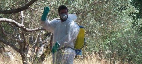 Κινδυνεύει η δακοκτονία σε Πελοπόννησο και Δυτ. Ελλάδα λόγω υποχρηματοδότησης, λένε οι γεωτεχνικοί