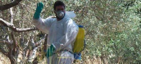 «Καμπανάκι» για την δακοκτονία από αγροτικούς συλλόγους