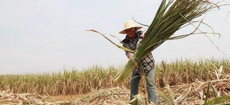 Δασμούς και στις εισαγωγές ζάχαρης επέβαλε η Κίνα