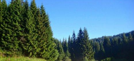 Ημερίδα για τους Δασικούς Χάρτες την Τετάρτη στο Βόλο