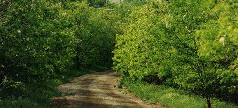 Έως 31 Μαρτίου αιτήσεις για εγκατάσταση μελισσοσμηνών στο δάσος ακακίας του Λιγνιτικού Κέντρου Δυτικής Μακεδονίας