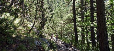 Ημερίδα για τη δημιουργία συστήματος αειφορικής διαχείρισης των ελληνικών δασών