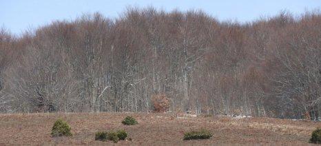 Ένωση Περιφερειών: Να ανασταλούν για ένα χρόνο οι διαδικασίες για τους δασικούς χάρτες