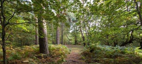 Εγκρίθηκαν 7,5 εκατ. ευρώ για πληρωμές παλαιών προγραμμάτων δάσωσης