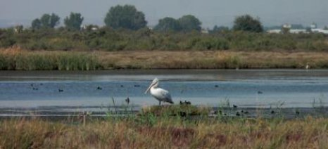 Στο Ευρωπαϊκό Δικαστήριο η Ελλάδα για ελλιπή προστασία των φυσικών οικοτόπων και των ειδών