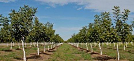 Καινοτόμες δενδροκομικές καλλιέργειες από το Πανεπιστήμιο Θεσσαλίας
