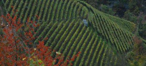 Συνάντηση εργασίας της Π.Ε.Δ. Θεσσαλίας αύριο για τους δασικούς χάρτες