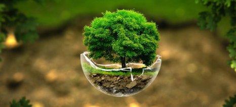 Η Γη έχει σήμερα τρία τρισεκατομμύρια δέντρα