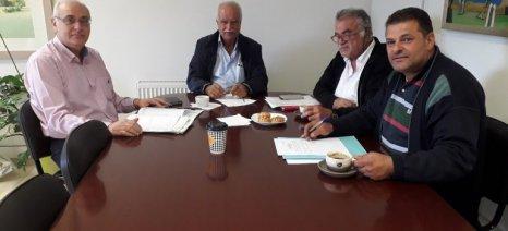 Συνάντηση στο Βιάννο για το θέμα της μη καρπόδεσης της ελιάς