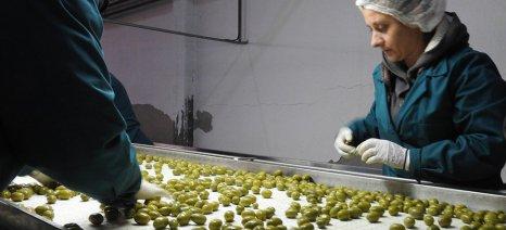 """Την επέκταση του εργοστασίου ελιάς στην τυποποίηση σχεδιάζει ο Α.Σ. """"Ένωση Αγρινίου"""""""