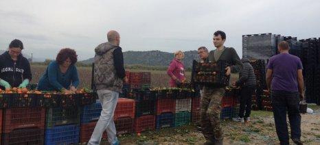 Άτυπο μητρώο ανέργων εργατών γης από τον δήμο Νάουσας