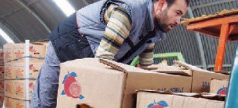 """Αναρτήθηκε στη """"Διαύγεια"""" η απόφαση ανακατανομής των αδιάθετων φρούτων και κηπευτικών"""