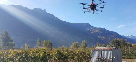 Η φυτοπροστασία των αμπελιών με drones, όνειρο ή πραγματικότητα;