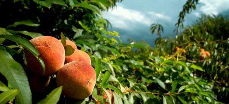 Έκκληση για διακοπή του ρωσικού εμπάργκο κάνουν οι Έλληνες εξαγωγείς φρούτων