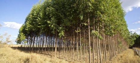 Αιτήσεις πληρωμής για τη Δάσωση του 2014 μέχρι τις 27 Φλεβάρη