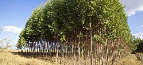 Αυξήθηκε από 7 σε 9 εκατ. ευρώ η δημόσια δαπάνη το 2015 για την πρώτη δάσωση γεωργικών γαιών