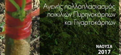 Εγχειρίδιο αγενούς πολλαπλασιασμού δενδρωδών από το Τμήμα Φυλλοβόλων Οπωροφόρων Δένδρων Νάουσας