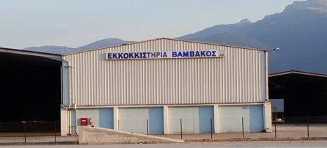Δέκα μέρες παράταση για την παράδοση σύσπορου βαμβακιού στα εκκοκκιστήρια