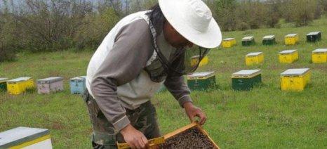 Στρες και ανομβρία αποδεκάτισαν τις μέλισσες στην Κομοτηνή