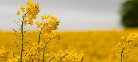 Λιγότερα βιοκαύσιμα από ενεργειακές καλλιέργειες θέλει η Ευρώπη