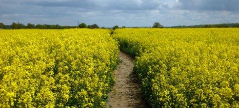 Βιοκαύσιμα από καλλιέργειες: Πέρασε από την ολομέλεια του Ευρωκοινοβουλίου το 7% έως το 2020