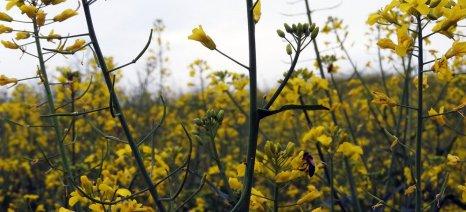 Η Κομισιόν προτείνει την ολοκληρωτική απαγόρευση της χρήσης των νεονικοτινοειδών στη γεωργία