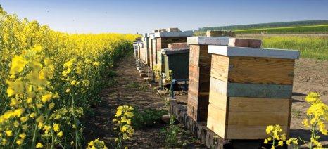 Ολοκληρώθηκε η τριήμερη ακρόαση των γιγάντων της φυτοπροστασίας για την απαγόρευση των νεονικοτινοειδών στην Ευρώπη