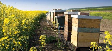 Από 7 έως 9 Δεκεμβρίου το 10ο Φεστιβάλ Ελληνικού Μελιού και Προϊόντων Μέλισσας