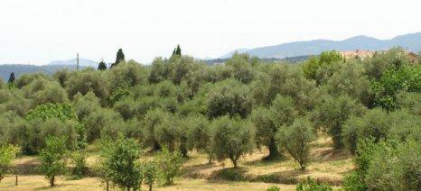 Σέρρες: Ψεκάστε τώρα τις ελιές για κυκλοκόνιο