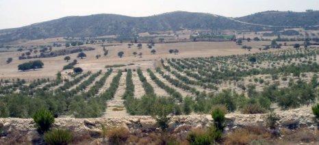 Οδηγίες για την παρατεταμένη ξηρασία στους ελαιώνες
