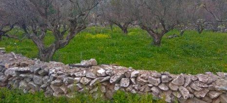 Compo Expert Hellas και ΧΕΛΛΑΦΑΡΜ στο πλευρό του Δήμου Ανατολικής Μάνης για την ανασύσταση του καμένου ελαιώνα