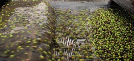 Οδηγίες προς ελαιοκαλλιεργητές και ελαιοτριβείς για την παραγωγή και αποθήκευση του ελαιόλαδου
