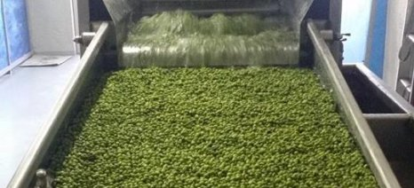 Καλαμάτα: Ημερίδα του Συνδέσμου Ελαιουργείων για τις εξελίξεις στην παραγωγή ελαιολάδου