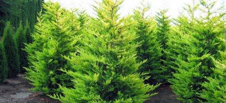 Φάμελλος: «Κανένα χριστουγεννιάτικο δέντρο στο ΧΥΤΑ Θεσσαλονίκης»