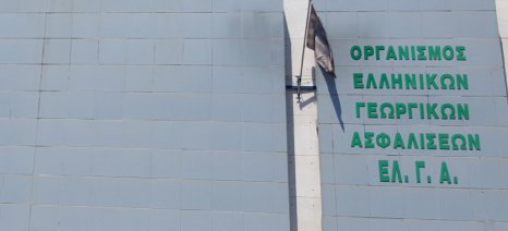 Αποζημιώσεις 1 εκατ. ευρώ για ζωικό κεφάλαιο από τον ΕΛΓΑ σήμερα