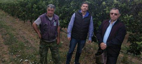 Παιδής και Λιόντος επισκέφτηκαν χωριά της Ελασσόνας όπου οι αγρότες επλήγησαν από το χαλάζι
