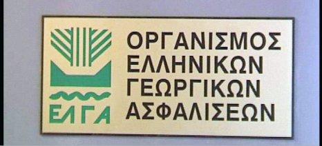 Αποστόλου: Αποζημιώσεις 4,4 εκατ. ευρώ στους παραγωγούς της Εύβοιας την Παρασκευή