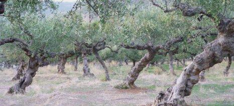Αίτημα της Περιφέρειας Πελοποννήσου να συμπεριληφθεί η ανομβρία-ξηρασία στα ζημιογόνα αίτια του ΕΛΓΑ