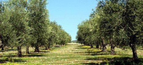 Μελέτη από το υπουργείο Εξωτερικών για την εξειδίκευση της παραγωγής και τα φορολογικά μέτρα στο γεωργικό εισόδημα