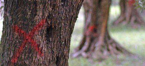 Άμεση δράση ζητούν οι ευρωβουλευτές για την πρόληψη της εξάπλωσης του Xylella